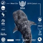2019 Accelerator Cohort