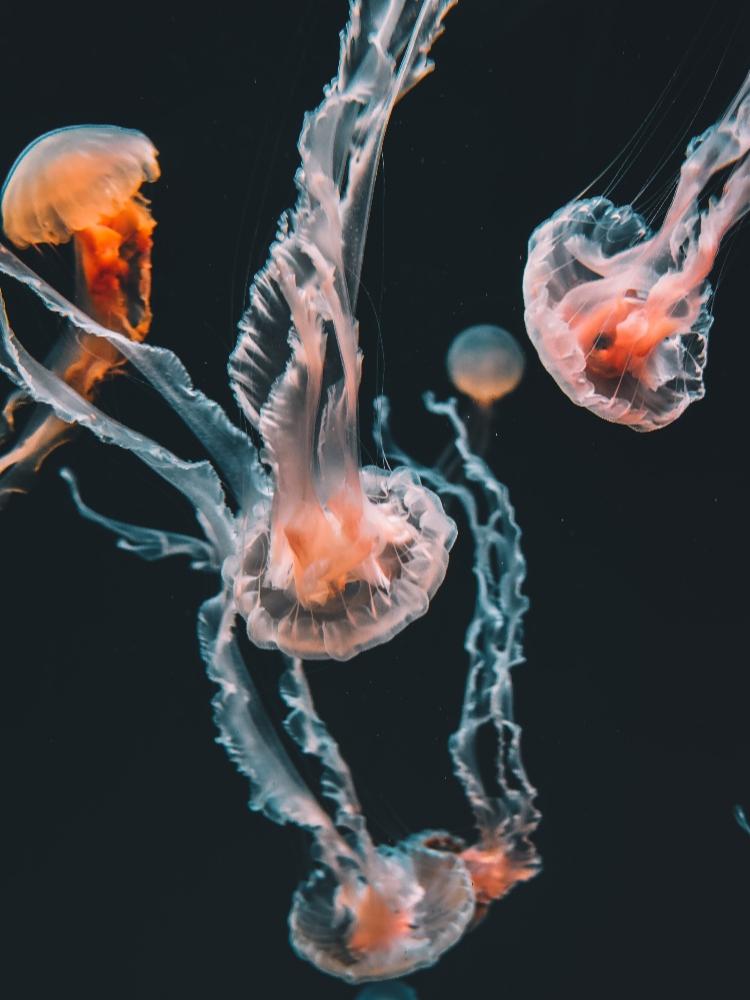 jellyfish vertical 750x1000 unsplash