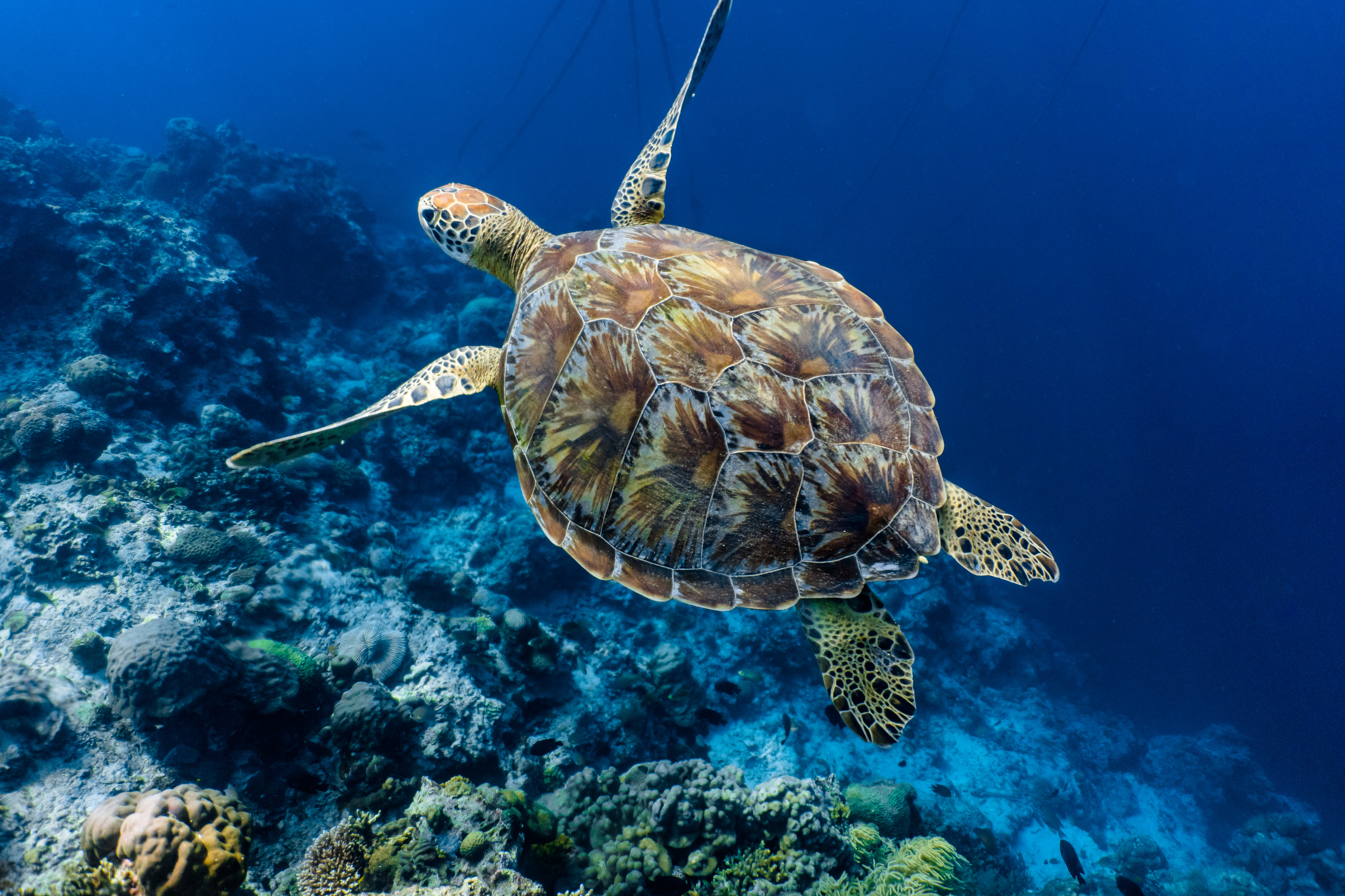 cameroon sea turtle conservation