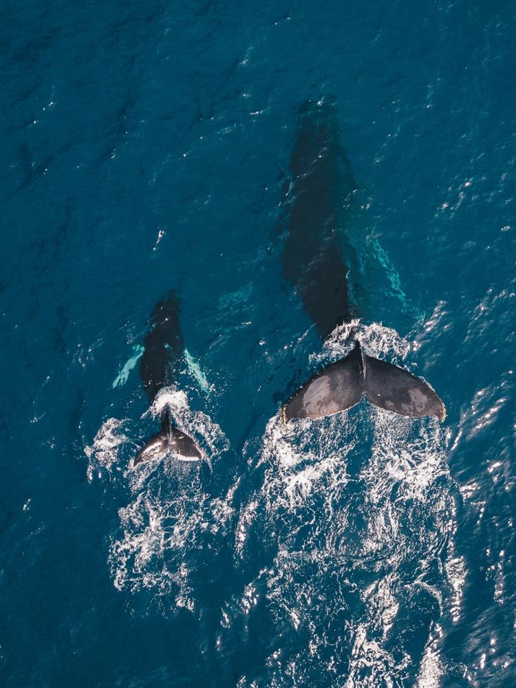 whales vertical 750x1000 unsplash